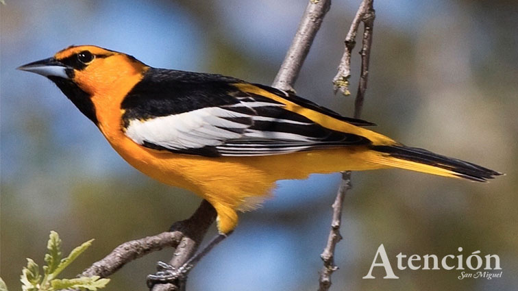 Join the Audubon Birdwalk and Great Backyard Bird Count