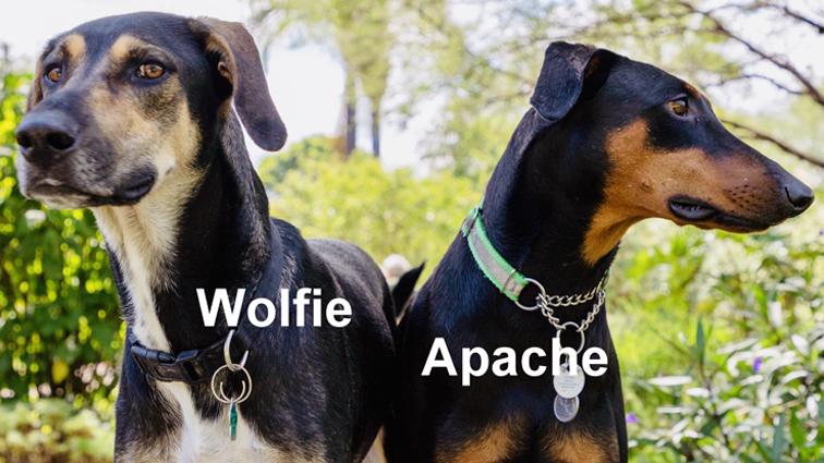 Wolfie Latona's New Life