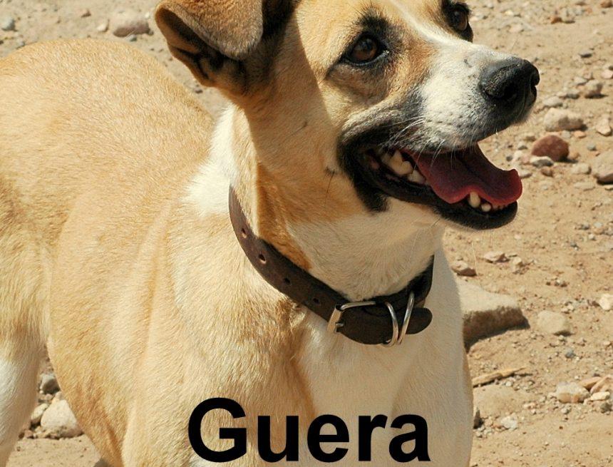 Hats Off to Güera