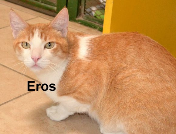 Eros and the Coronavirus