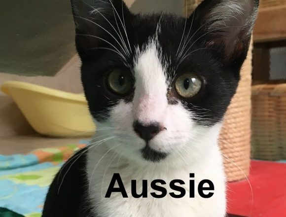 A Message from Aussie