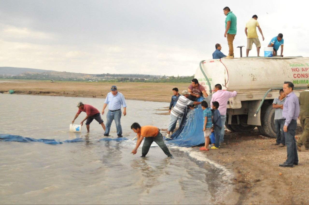AA-AGIA-U-TERRENOS-Siembra-de-peces-en-Presa-Allende-foto-ilustrativa.jpg