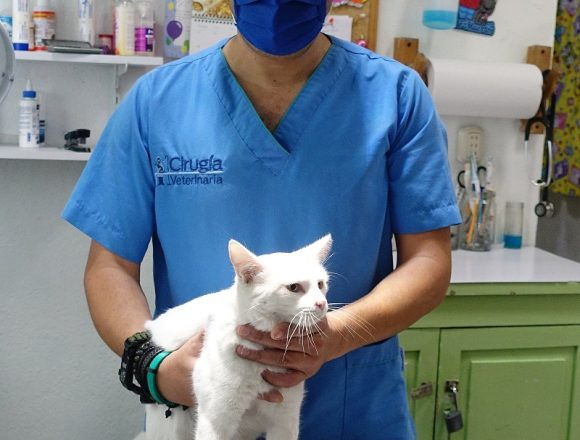 SPA Clinic Is a Great Choice for Your Veterinary Needs!