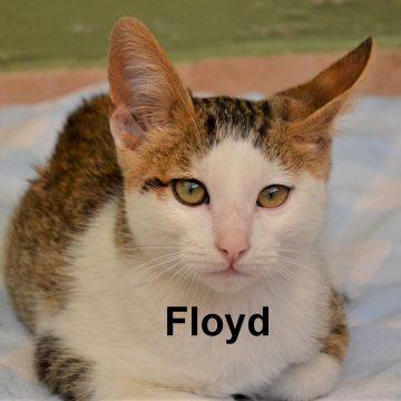 Floyd and Bob—Survivors