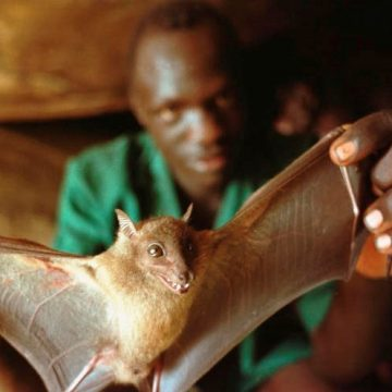 Living in an Upended World: Zoonotic Spillover, Deforestation's Legacy (Part 1)