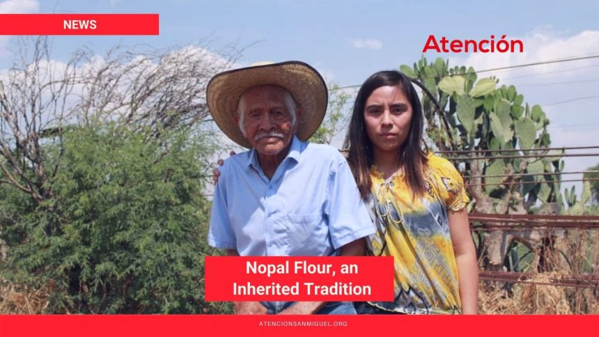 Nopal Flour, an Inherited Tradition