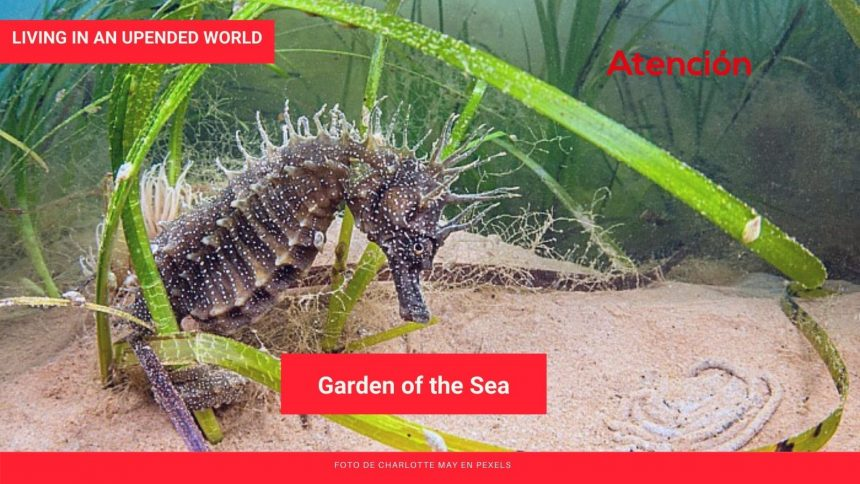 Living in an Upended World: Garden of the Sea