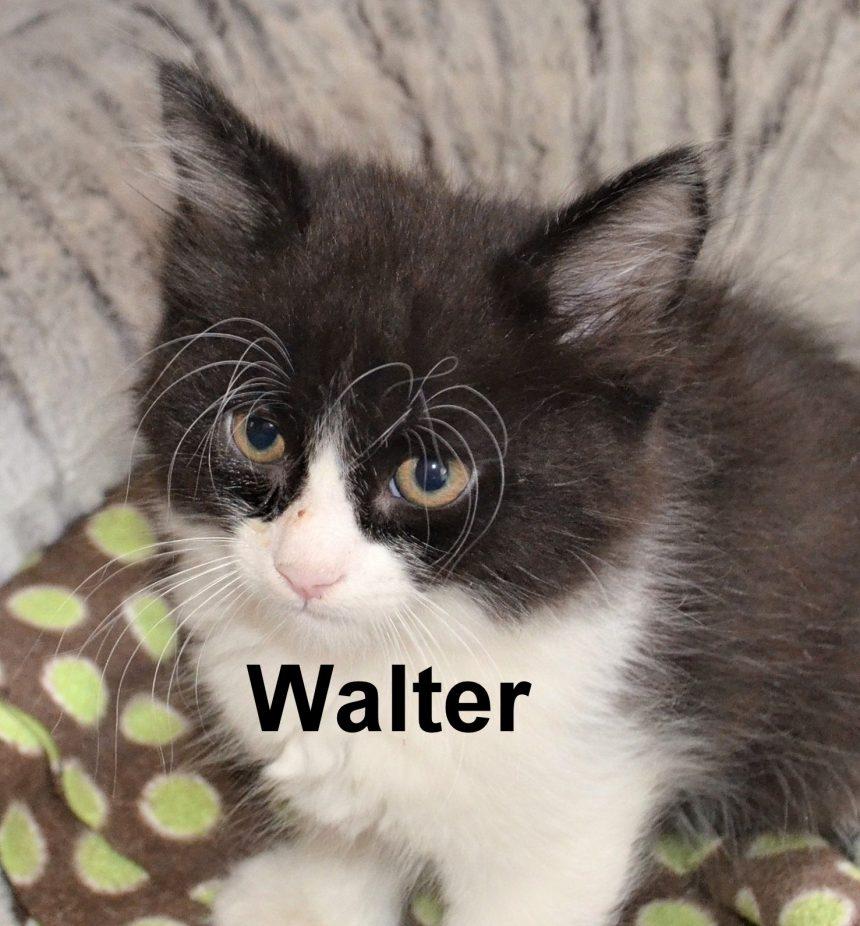 Help Curb Feline Overpopulation