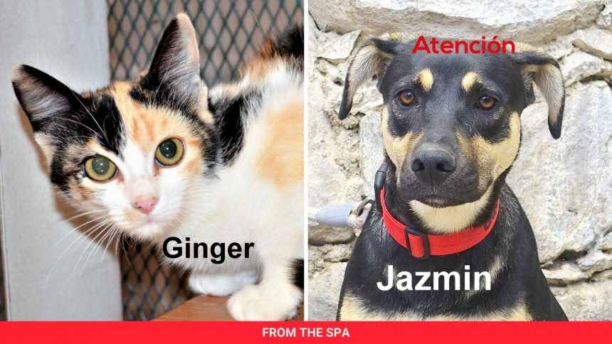 SPA Matching Donations Offer and June Pets of the Month