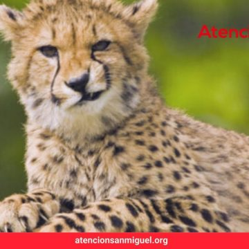 East Africa Flying Safari at half off And More Travel News